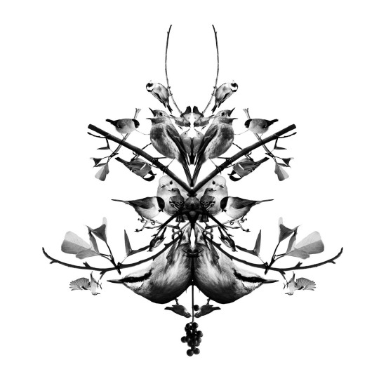 singvoegel_formation_ornament_kl